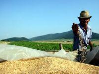 Efectul crizei din Libia: se ieftinesc cerealele! Pretul graul, cel mai mare declin din 2008 si pana acum!