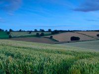 Guvernul va obliga societatile sa isi reevalueze terenurile, pentru a incasa mai multi bani la buget