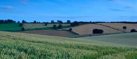 Cum se vor vinde terenurile catre straini. Reglementarile care fac mai dificila instrainarea pamantului Romaniei