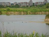 """Scandal in jurul """"Deltei Bucurestiului"""". Proprietarii terenurilor se opun ca zona sa fie protejata: cer sa fie despagubiti cu 1000 euro/metru patrat"""