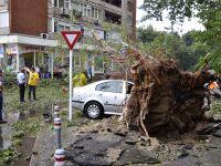 Accidente in Capitala, din cauza vantului. Un copac a cazut peste 8 masini