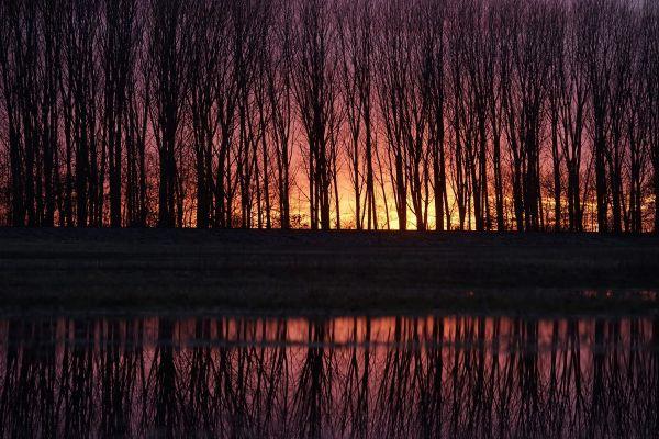 Copacii se reflecta in apa in exces ce acopera un teren agricol, in vecinatatea Hosszupalyi, 235 km est de Budapesta, Ungaria. Foto: Agerpres/EPA