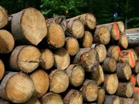 Firma austriaca Holzindustrie Schweighofer investeste 150 milioane de euro intr-o fabrica de lemn in Covasna