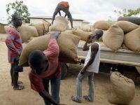 Blestemul ciocolatei: trafic de copii, hartuirea femeilor si munca de ocna. Cei mai multi dintre producatorii de cacao nu-i stiu gustul