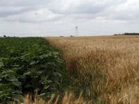 """Basescu: """"Daca Romania ar avea o agricultura ca la carte, tara noastra ar putea exporta, intr-un an, alimente de 50 miliarde de euro"""""""