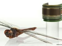 Primii ochi artificiali, creati in laborator. Comisia Europeana a finantat cu 2 mil. euro cercetarea
