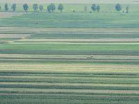 Primariile vor primi cel tarziu in 2015 cota parte din impozitul platit de agricultori
