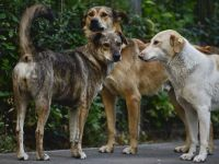 6 octombrie, data la care mergem la referendum privind eutanasierea cainilor maidanezi
