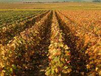 Ioana Basescu pariaza pe agricultura. A investit 1,3 mil. euro in 300 hectare din Calarasi