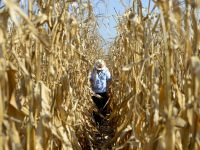 Agricultura si constructiile au franat cresterea economica, sustinuta de industrie si impozite nete