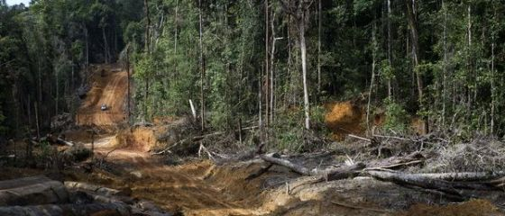 Avem paduri doar pe hartie. Peste 70 de hectare de stejari lipsesc cu desavarsire, desi autoritatile au alocat 2 mil. lei pentru plantarea lor