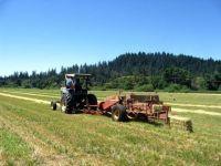 Ministerul Agriculturii vrea sa acceseze 150 de milioane de euro, bani europeni, pentru ferme