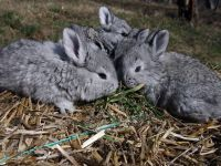 "Cumparam carne ""Made in China"". Anul trecut, Romania a importat 92.000 de tone de iepure"