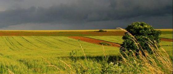 Productia de cereale pentru boabe a crescut cu 64% anul trecut