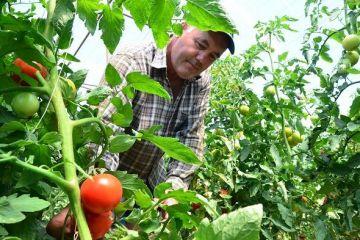 Agricultura hidroponica, afacerea viitorului. Metoda inedita prin care fermierii pot recolta tot anul, iar profitul este mult mai mare