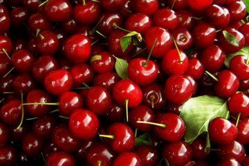 Vremea buna aduce profit fermierilor, care au investit zeci de mii de euro in pomi din strainatate