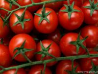 Schimbarile climatice modifica soiurile de legume cultivate in Romania. Semintele create in laborator salveaza culturile fermierilor, dar nu mai ofera gustul de altadata