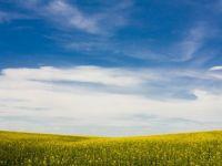 Aproape jumatate din marii latifundiari ai Romaniei sunt straini, cum ajung organismele modificate genetic in farfuriile noastre fara sa stim si tara care si-a  umflat  PIB-ul de 5 ori, peste noapte