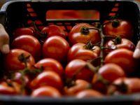 """Agricultură fără cap. În ciuda succesului pe care l-a avut programul """"Roşia românească"""", fermierii aruncă legumele, pentru că nu au unde să le vândă"""