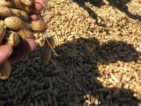 Industria ciocolatei, lovita de cresterea preturilor la alunele importate din Turcia, cel mai mare producator din lume