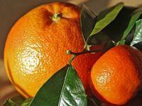 Preturile au scazut in august cu 0,3%. Cel mai mult s-au ieftinit fructele proaspete, cu exceptia citricelor, ale caror preturi au crescut cu 12%. Inflatia anuala a coborat la 0,84%