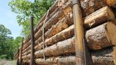 Inspectorul Pro: Dezastru în Munții Rodnei. Copacii se taie ilegal, lemnul furat se toacă în inima pădurii