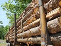Concurenţa investighează 94 de companii care activează pe piața lemnului, între care Holzindustrie Schweighofer, Kronospan sau Egger