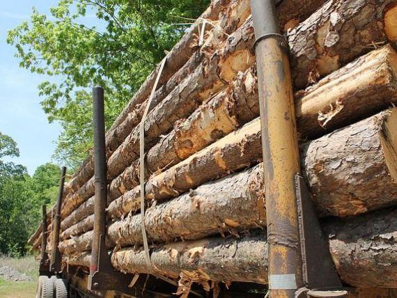 Leroy Merlin nu mai cumpara lemn de la companiile care nu detin certificarile care le permit exploatarile silvice responsabile