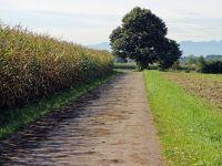 Agricultura ca-n Evul Mediu. Mai mult de jumatate dintre micii fermieri vor sa renunte la pamant, pentru ca nu recupereaza banii investiti