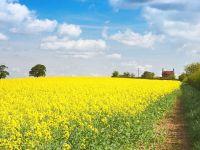 Eurostat: Productia agricola a Romaniei a fost de 15,5 mld. euro anul trecut, 4% din UE