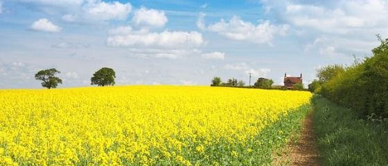 Proiecte agricole de 400 mil. euro, ratate pentru ca bancile nu au acordat credite pentru cofinantare. Agricultura a atras in 2014 fonduri europene de 2,7 mld. euro