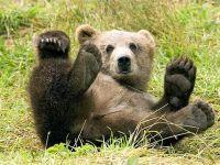 """Isarescu: Calmarea cursului leu-franc ar costa miliarde de euro de la rezerva valutara; prima autostrada """"ecologica"""" din Romania, care va fi traversata de ursi; ce afaceri au vedetele autohtone"""