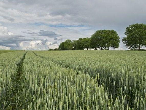Autoritățile înăspresc condițiile pentru achiziția de terenuri agricole în România, după ce 40% au ajuns în posesia străinilor