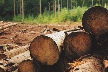 Asociatia pentru Certificare Forestiera se dezasociaza de Holzindustrie Schweighofer si isi anunta prezenta permanenta in Romania. Reactia grupului austriac