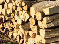 Curtea de Conturi Europeana: Grecia, Ungaria, Romania si Spania incalca legislatia UE privind importurile de lemn