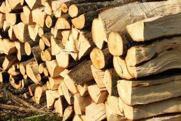Razboi pe preturile de pornire ale lemnului. Romsilva le-a triplat, iar cei din industrie spun ca vor intra curand in criza