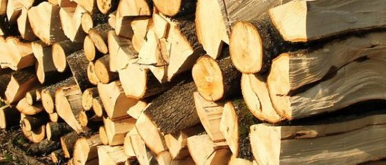 Ministerul Mediului vrea sa interzica exportul de busteni, cherestea si lemn de foc, pe termen limitat. Ponta: Miercuri dezbatem in Guvern ordonanta
