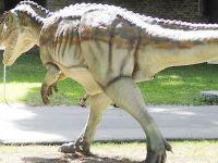 Dino Parc, cel mai mare parc de dinozauri din sud-estul Europei, s-a deschis la Rasnov. Pretul biletelor