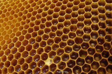 Mierea va fi mai putina anul acesta. Apicultorii dau vina pe un pesticid