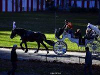 Numarul trasurilor cu cai din faimosul Central Park, redus cu 50% pentru a pune capat activitatii crude fata de animale