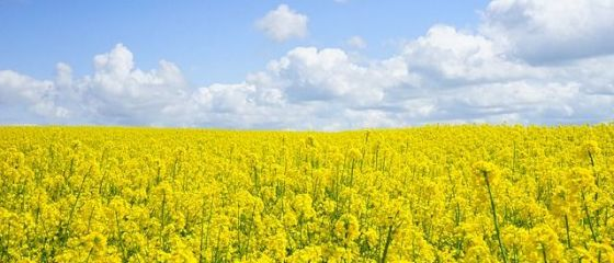 Asociatia Europeana de Biodiesel reclama Polonia la UE, pentru ca vinde biocombustibili la pret de dumping, inclusiv in Romania
