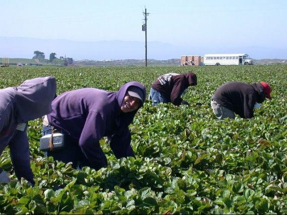 Producatorii agricoli se plang ca nu au forta de munca, pentru ca statul incurajeaza oamenii sa stea acasa cu ajutoare sociale, care ajung la 10 mld. euro/an