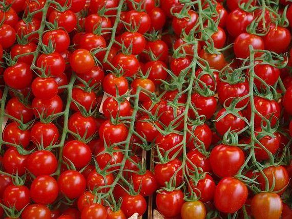 Programul  Roșia românească  va continua și în 2019. Câți bani primesc fermierii de la stat pentru culturile de tomate