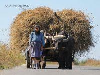 Amenzi pentru crescatorii de animale care nu anunta decesul acestora. Legea se va aplica atat fermierilor, cat si gospodariilor mici