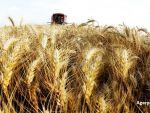 Recoltele record de grau din Romania, Rusia si Ucraina scad pretul la nivel mondial. Ikar:  Cele trei tari au o productie colosala, pe care trebuie sa o vanda
