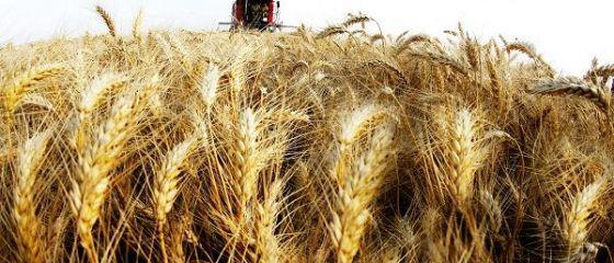 Romania, intre tarile cu cea mai ridicata productie agricola din UE