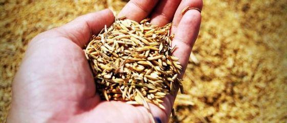 Tinerii vor sa faca afaceri la sate. Finantarile nerambursabile pentru instalarea tinerilor fermieri la tara s-au terminat cu 3 luni mai devreme