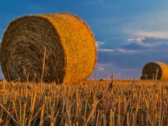 Romania paradoxala: inregistreaza recolte record la cereale, dar importa tot mai multe produse agroalimentare. Deficitul balantei comerciale, in crestere cu 600 mil. euro;