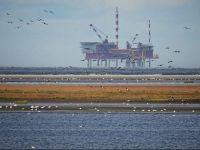 Petrolul isi continua caderea, dupa ce Rusia a anuntat ca nu va participa la reuniunea OPEC. De ce se prabuseste pretul titeiului