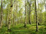Carrefour, Marks  Spencer, Nestlé si Unilever investesc in salvarea padurilor din Norvegia. Guvernul de la Oslo lanseaza un fond de 100 mil. dolari